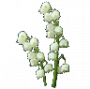 consumables:lightblossoms.png