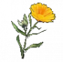 consumables:terra_flower.png
