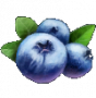 resource:berry.png