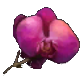 resource:icon_field_flowers.png