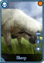 resource:sheep.png